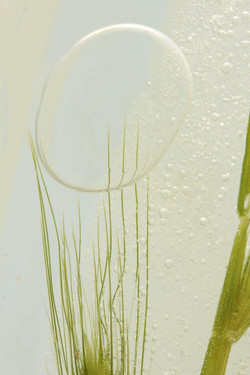 Grass with Ice bubble