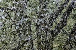 Woodland Multiple Exposure