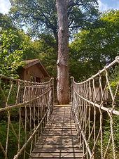 Treehouse Bridge_edited.jpg