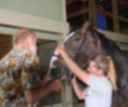 Veterinarian Services Mitch Benson DVM Oregon Horse Vet