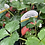 Thumbnail: Strawberry Plants