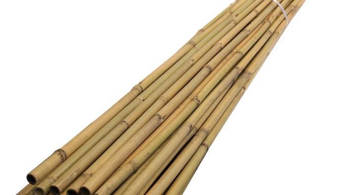 Bamboo Canes 2.4m Long (Bundles of 10)