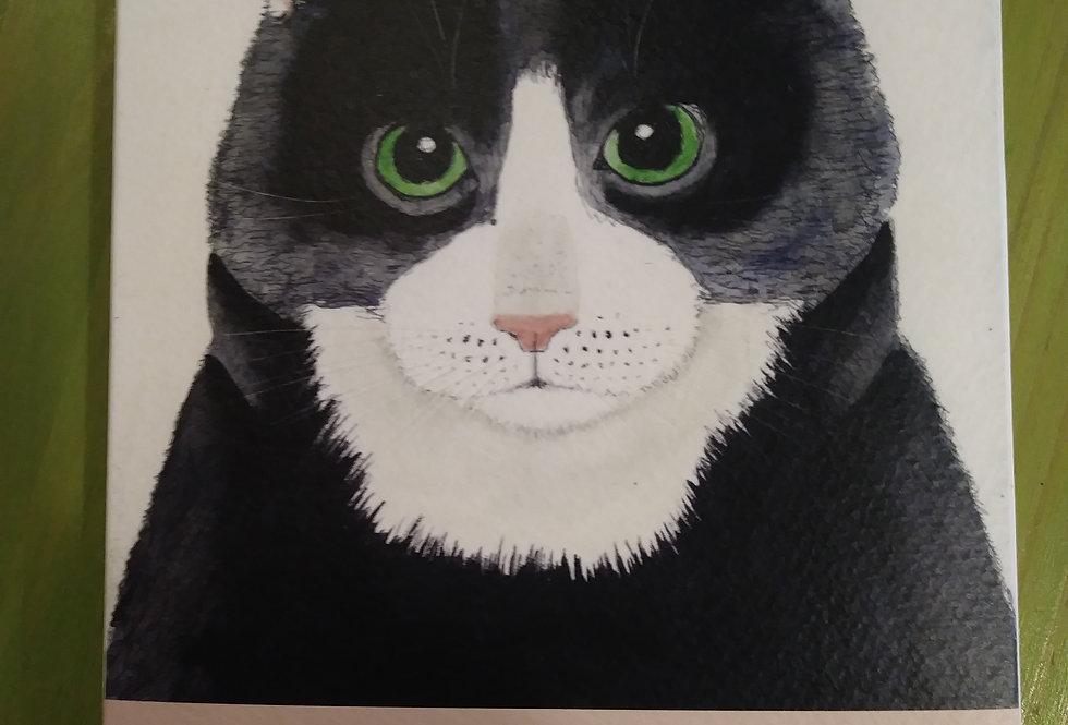Feline Friends Notecards