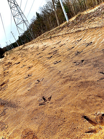 Turkey Tracks.jpg