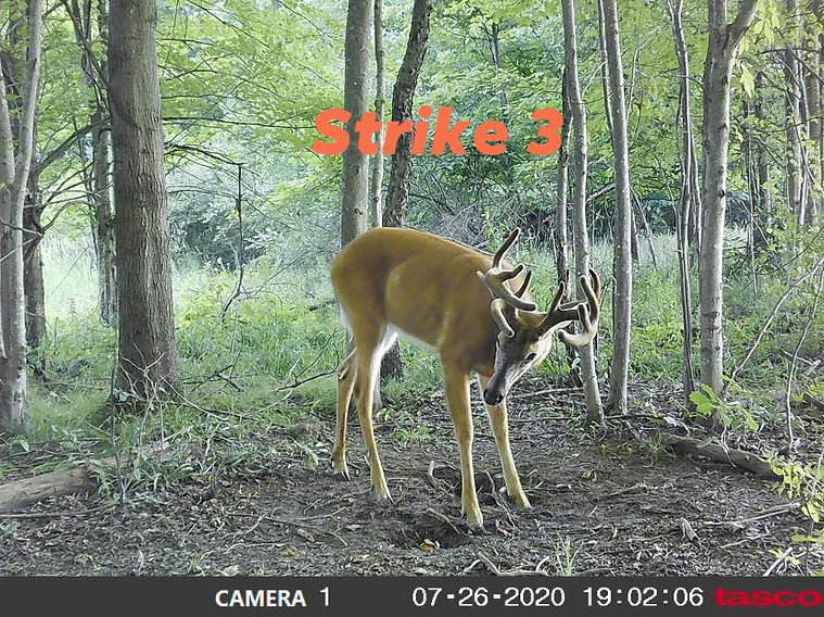 Strike 3.jpg