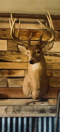 Big Buck!