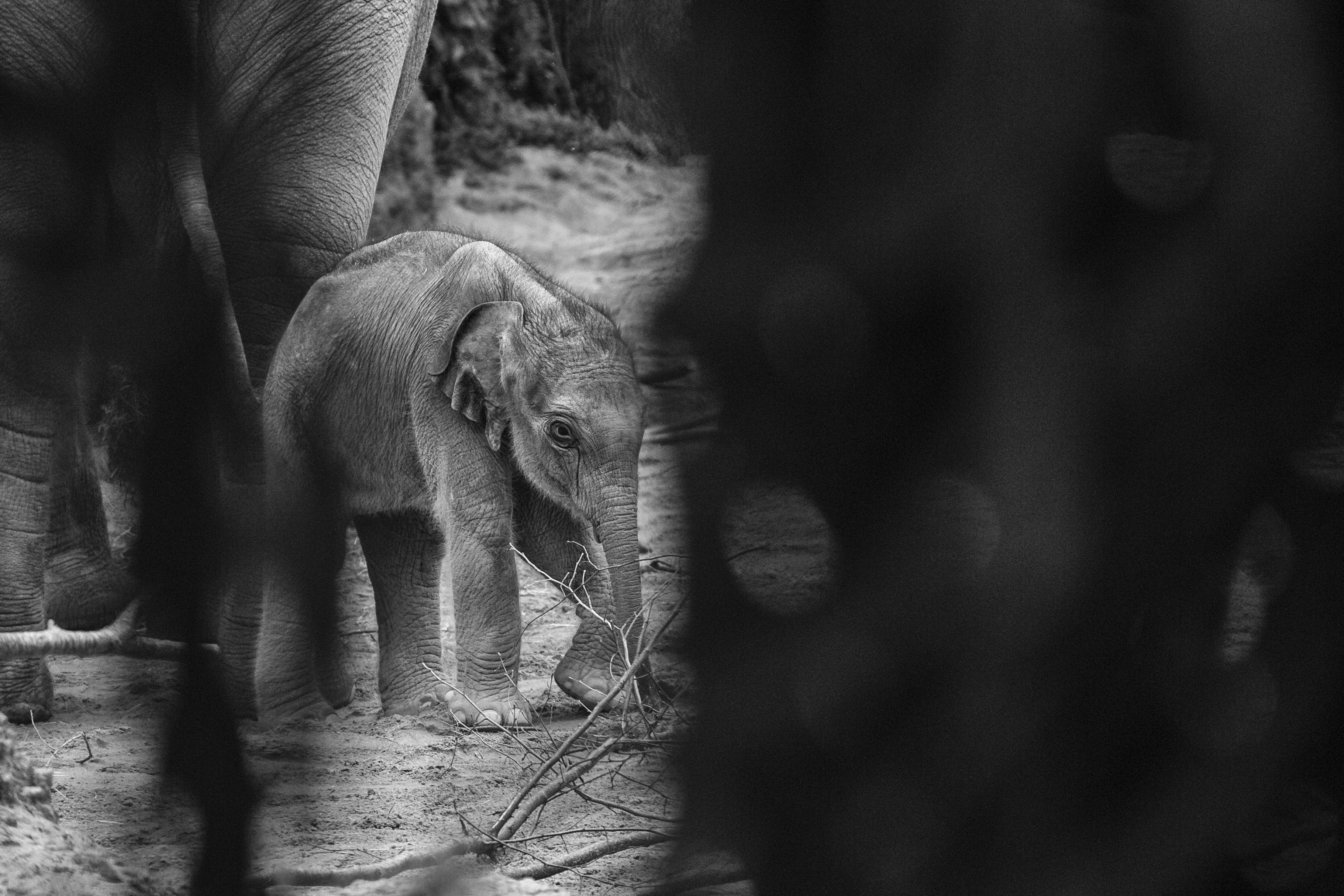 Masoala Zoo Zürich Baby Elefant