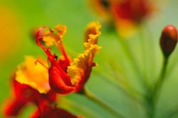 "Flower Makro ""Painting"" by VeraLey"