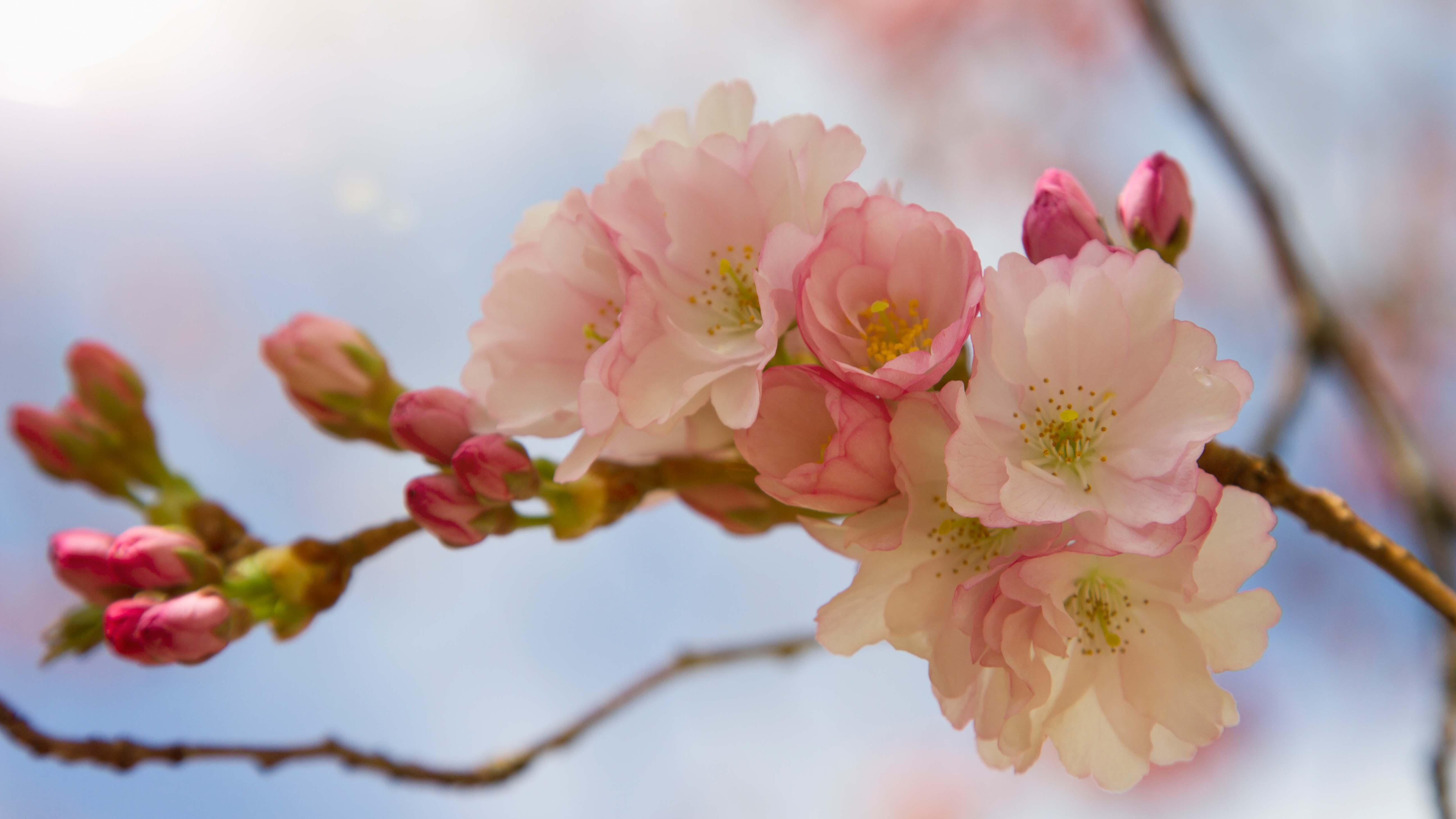 KirschblütenLensflare_MG_7838_HDR_Kopie