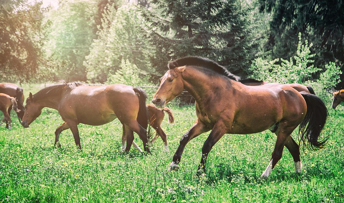Pferde im Jura