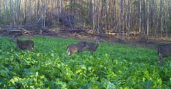 deer_slideshow
