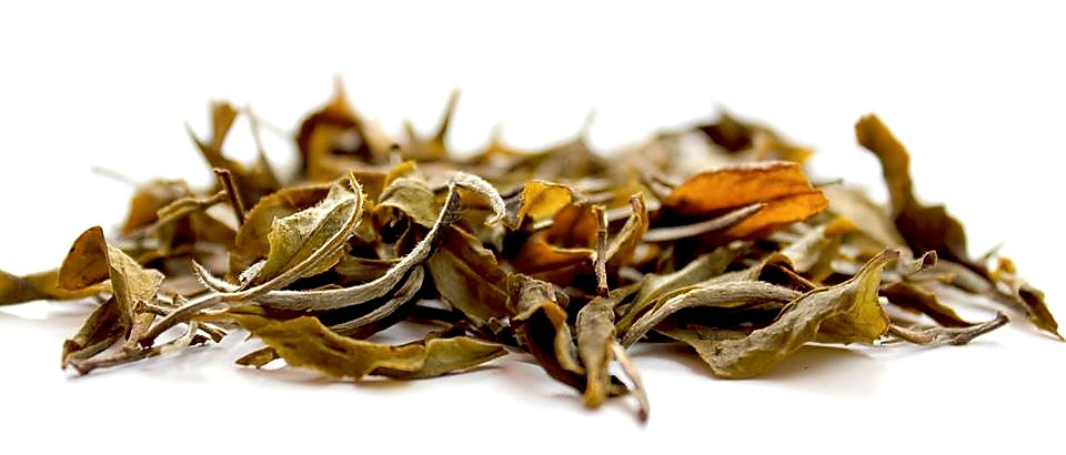 Darjeeling Silver Tips White tea - Versi
