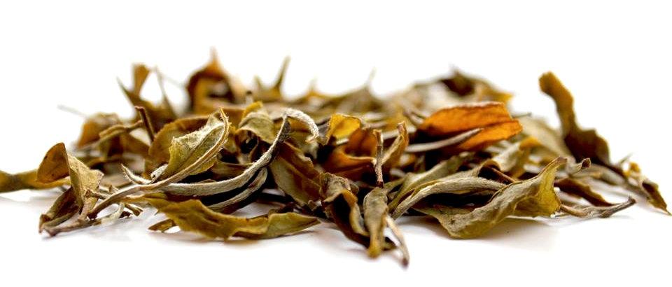 Darjeeling Silver Tips White tea - Versi