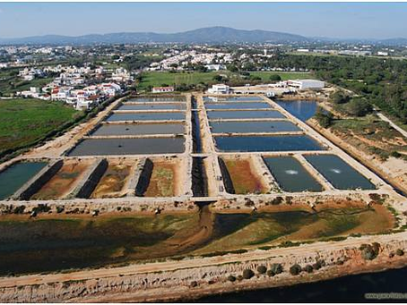 Portugal and Responsible Aquaculture: Our work with EPPO to improve fish welfare