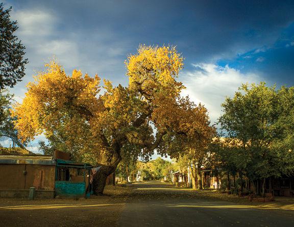 _Cerrillos Cottonwood in October_ - Margaret Cushing