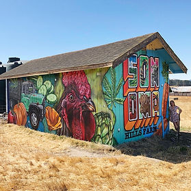 Sonoma Hills Farm Murals.JPG