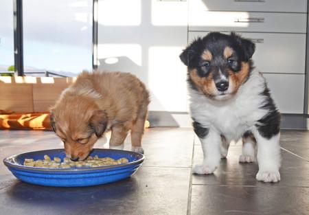 Frisco und Freya 5 Wochen alt.
