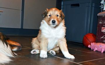 Freya 4 Wochen alt.