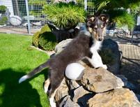 Isa 12 Wochen alt