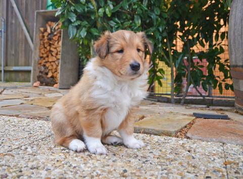 Freya 5 Wochen alt.
