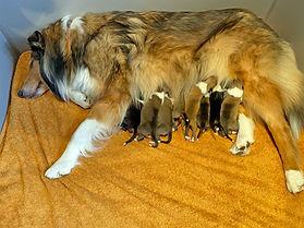 9 Welpen sind geboren