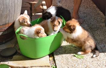 Woche 5,die Bande helfen Carl-Henrik beim Gartenarbeit. ; )