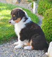 Ginger 5 Wochen alt.