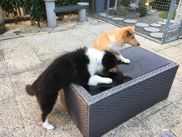 Freya besucht Frisco um Tschüss zu sagen. sie sind 16 Wochen alt.
