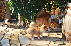 Freya und Frisco 7 Wochen alt.