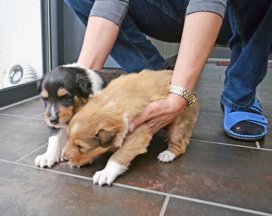 Freya und Frisco 3 Wochen alt zum ersten Mal auf glatten Boden.