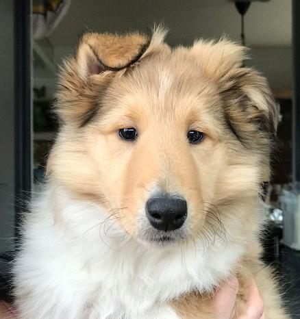 Freya 10 Wochen alt.