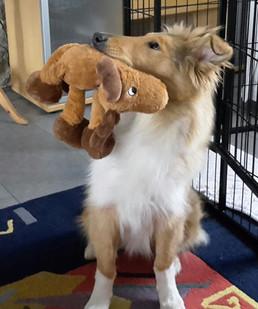 Freya hat zu Hause ein Elch erlegt. ; )