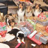 Frisco öffnet sein Weihnachts-Geschenk.