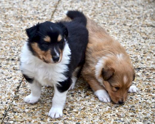 Frisco und Freya 4 Wochen alt.