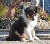Ginger 5 Wochen alt
