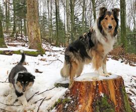 Frisco, 10 Wochen alt, im Wald mit Urgrossmutter Bess..