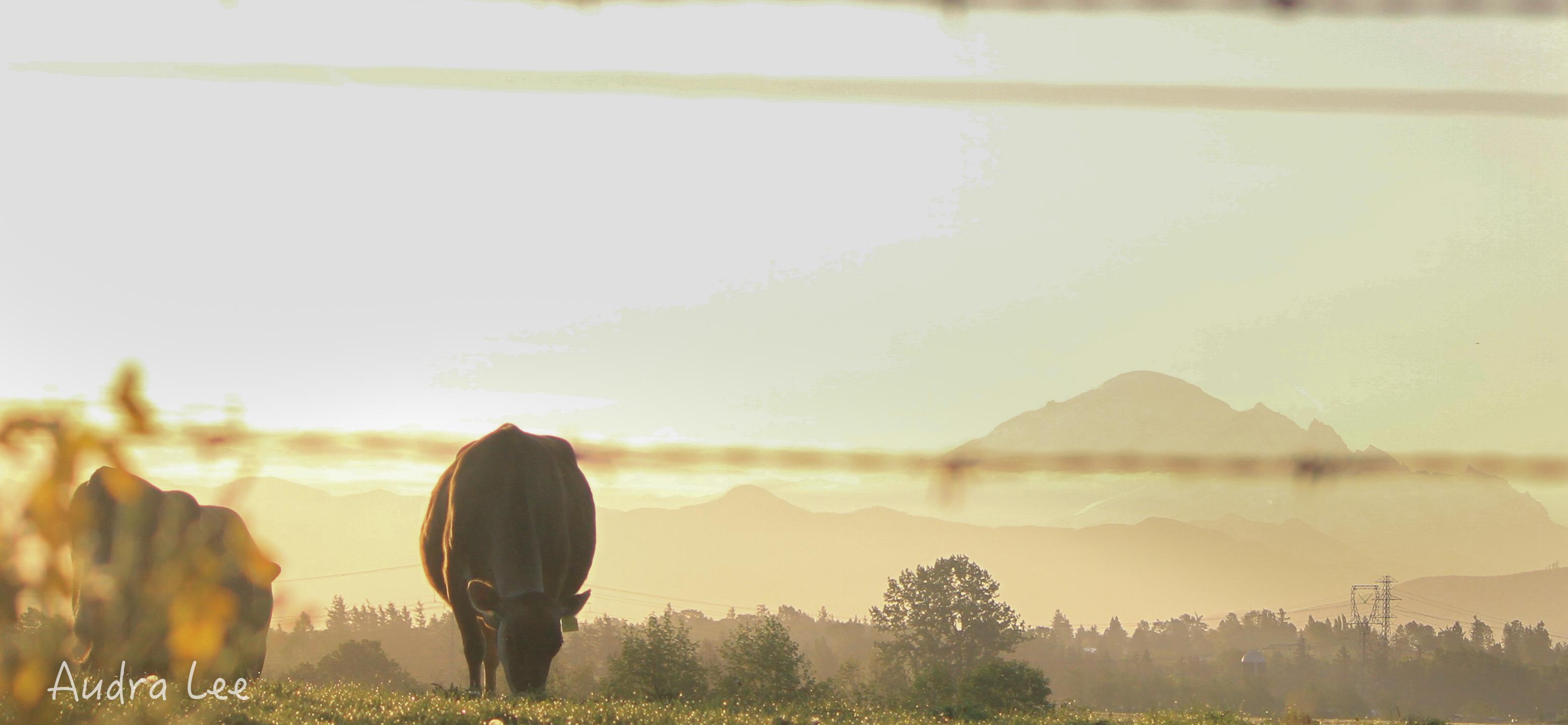 Whatcom County Sunrise