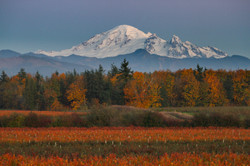 County views of Mt Baker