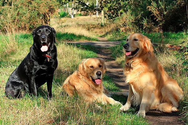 3-dogs-at-park.jpg