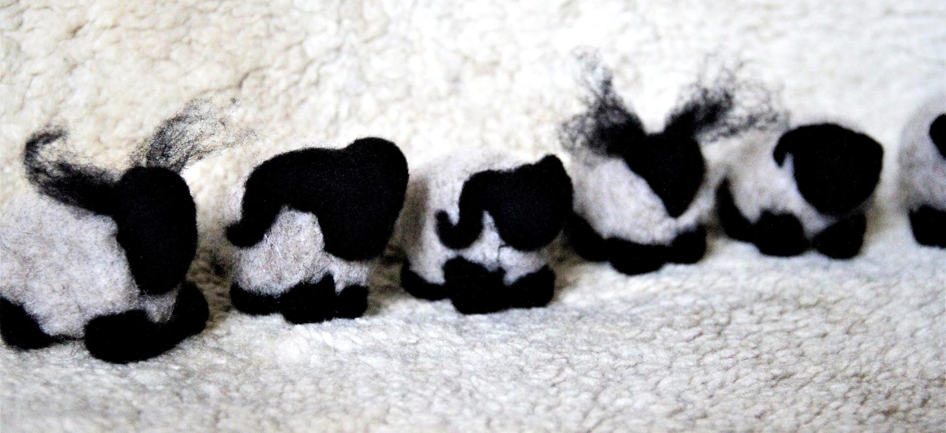 Mouton feutrés du trièves