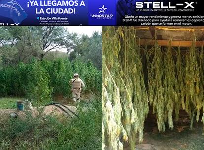 SEDENA destruye plantío de mariguana en Aconchi