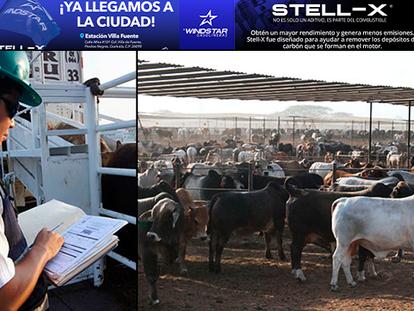 Agua Prieta es la tercera frontera del país por donde más ganado bovino cruza hacia EU