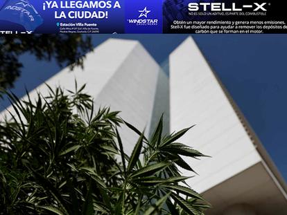 Día histórico: Senado de México aprueba legalización de marihuana para uso recreativo y científico