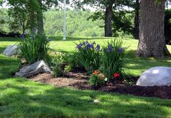 Boulders in Planting