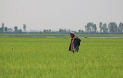 Farmer in Kambodscha