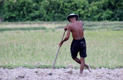 Landwirt in Kambodscha