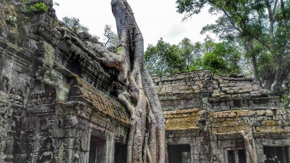Ta Phrom, Kambodscha