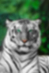tigre.jpeg