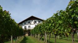 Casa con viñedos