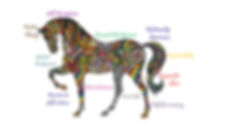 hippy horse.png